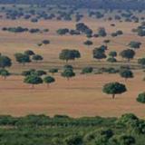 CABAÑEROS: Ruta Sierra de Castellar de los Bueyes